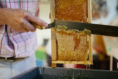 Image - Immersion au coeur des ruches - Fete de la Nature 2020